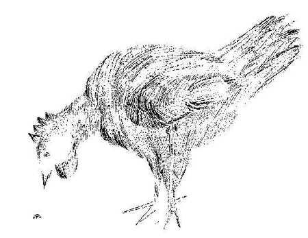 Chicken_w_bug